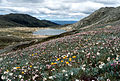 CSIRO ScienceImage 2662 Herbfield and Mountain Lake.jpg