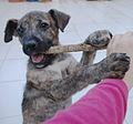 Cachorro-perro.jpg