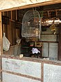Caged owl in Pasty Market.jpg