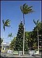 Cairns Christmas Tree-1 (15840832469).jpg