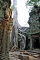 Cambodia-2544 -Told you to put that tree in a planter not on the roof. (3609073846).jpg