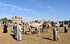 Camel market at Daraw in 2017, photo by Hatem moushir 24.jpg