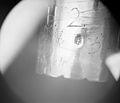 Candelabrum (one of a pair) MET 144201.jpg
