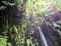 Canopy - Waterfall.jpg