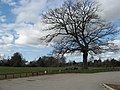 Car park with ancient oak tree - geograph.org.uk - 1773568.jpg