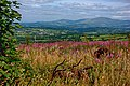 Carlow Countryside from Graiguenamanagh.jpg