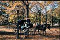 Carriage Central Park.jpg
