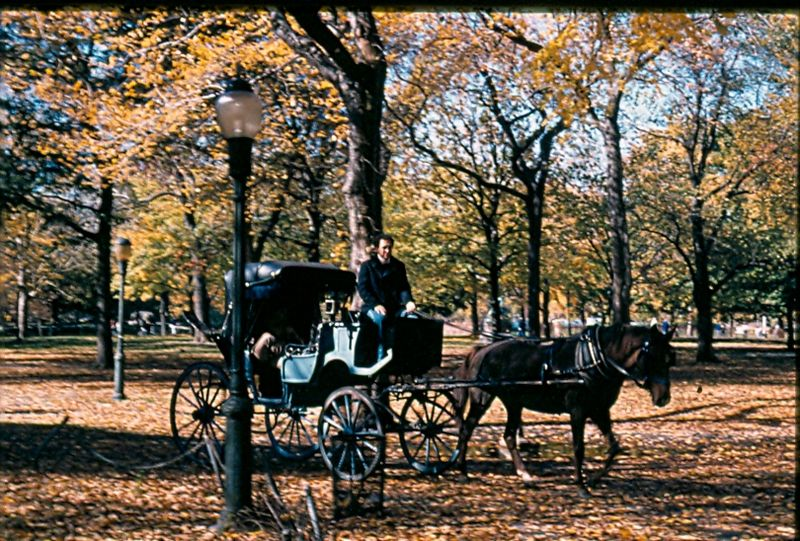 File:Carriage Central Park.jpg