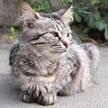 Cat in Simferopol2.jpg
