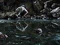 Cave Ice Pictures (0dc3287c-7e7a-4dac-a218-d8f30f11b3b5).jpg