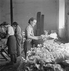 Cecil Beaton Photographs- Women's Horticultural College, Waterperry House, Oxfordshire, 1943 DB255.jpg