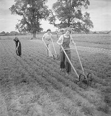 Cecil Beaton Photographs- Women's Horticultural College, Waterperry House, Oxfordshire, 1943 DB258.jpg