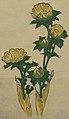 Center flower detail, from- MET 2013 691 04 (cropped).jpg