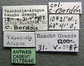 Cephalotes crenaticeps casent0178646 label 1.jpg