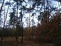 Cherkas'kyi district, Cherkas'ka oblast, Ukraine - panoramio (704).jpg