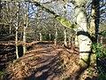 Claycart Bottom - geograph.org.uk - 1743282.jpg