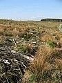 Clear fell area on Woodhill Edge - geograph.org.uk - 799545.jpg