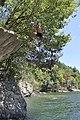 Cliff jumping at Summersville Lake - 16.jpg