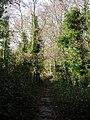 Colehill, bridleway - geograph.org.uk - 1604278.jpg