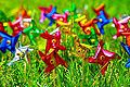 Colors of Springtime Happiness (4463360814).jpg