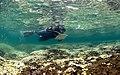 Coral Bleaching in Hawaii.jpg