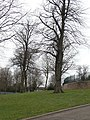 Corporation Oaks - geograph.org.uk - 1196695.jpg