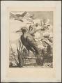 Corvus corax - 1700-1880 - Print - Iconographia Zoologica - Special Collections University of Amsterdam - UBA01 IZ15700207.tif