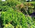 Cottage Garden - geograph.org.uk - 510253.jpg