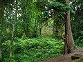 Cragside Estate - geograph.org.uk - 919998.jpg