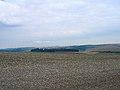 Cranedean Plantation, near Falmer - geograph.org.uk - 51628.jpg