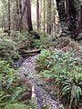 Creek (16872346474).jpg