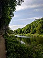 Creswell Gorge, Creswell Craggs, Notts (128).jpg
