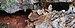 Cueva de los Petroglifos.jpg