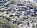Cultivo de Cerezos.jpg