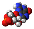 Cyclic-guanosine-monophosphate-anion-3D-spacefill.png