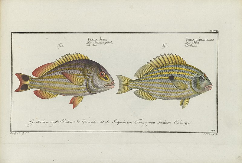 File:D. Marcus Elieser Bloch's, ausübenden Arztes zu Berlin ... Oeconomische Naturgeschichte der Fische Deutschlands (20867677342).jpg