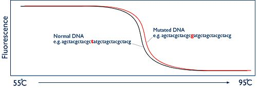 DNA melting scematic curve 2.jpg