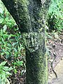 Daintree trail walk.jpg