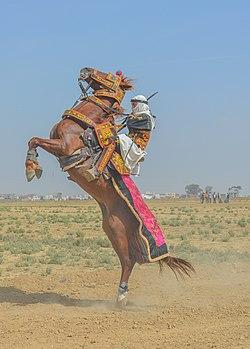 afrički crni magarca com