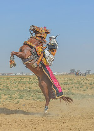 Dancing Knight during the first first equestrian festival in Kairouan on April 17th, 2016. I nominate it as FP because it shows lot of details about equestrian art in Tunisia.