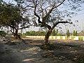 Danesh Sheikh Lane Bus Terminus Site - Howrah 2011-03-19 1824.JPG