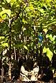 Daniel Pavon Cuellar Miniature Forests 2017.jpg