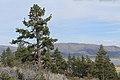Davis Creek Park - panoramio (42).jpg