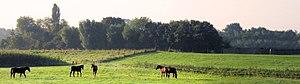 Gelderland - Landscape near Putten