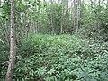 Degučių sen., Lithuania - panoramio (264).jpg