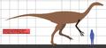 Deinocheirus SIZE.png