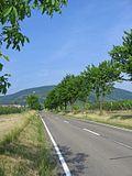 German Wine Route near Edesheim