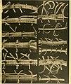 Die gestielten crinoiden der Siboga-expedition (1907) (20737995660).jpg