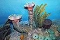 Diorama of a Devonian seafloor - corals, trilobite, gastropod, algae (31783882118).jpg