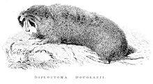 Woodcut of large gopher from 1829 book